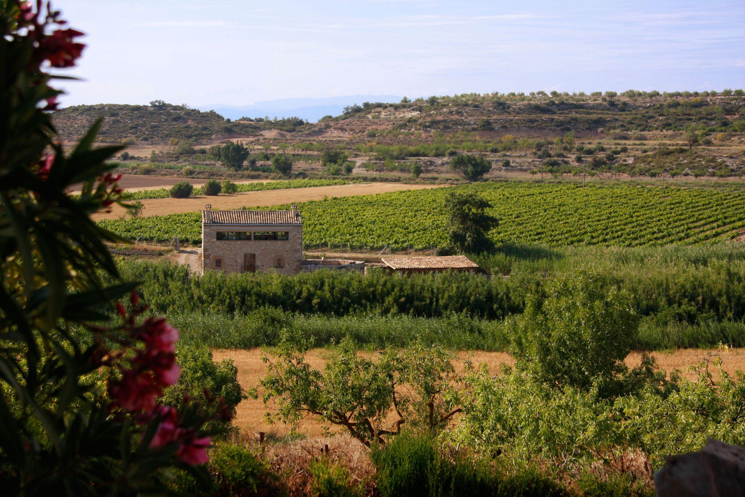 Imagen de Mas Fogonussa, nuestra casa rural, rodeada de los viñedos, el bosque y algunas flores.